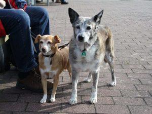 St. Peter-Ording Ferienwohnung Hund: Foto 2 Hund mit Leine